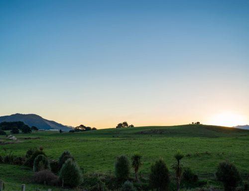 Kōrerongia kia haemata! – Mahuru Māori Wiki Tuawhā